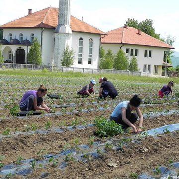 DŽEMAT MAUROVIĆI: Maksimalan razvoj i iskorištavanje vakufske zemlje za proizvodnju hrane
