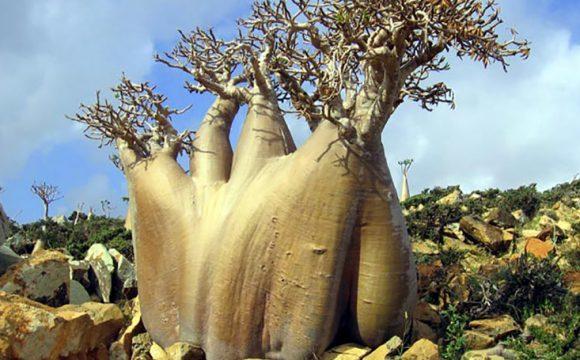 SOKOTRA: Mistično ostrvo izvanzemaljske ljepote, dragulj Arapskog mora