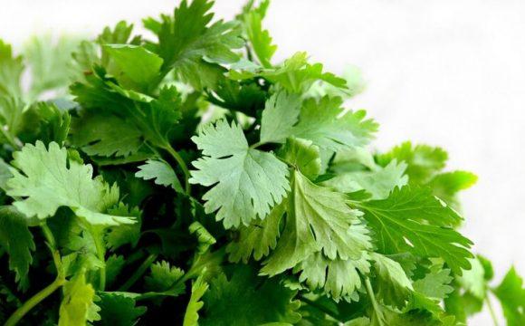 Čudotvorna biljka čijom ćete primjenom brzo izgubiti kilograme